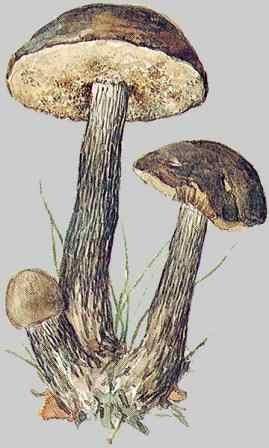бредятина
