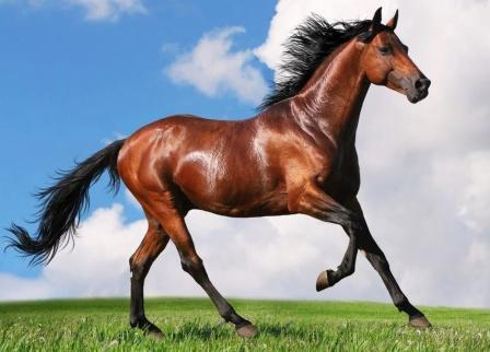 конь-время